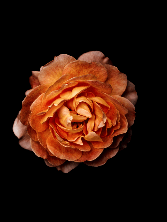 Flowers-17.png