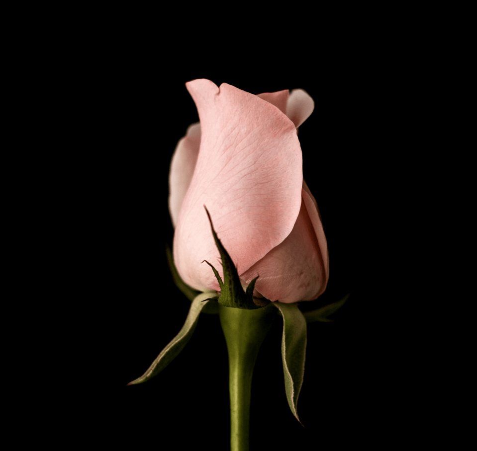 Flowers-8.png